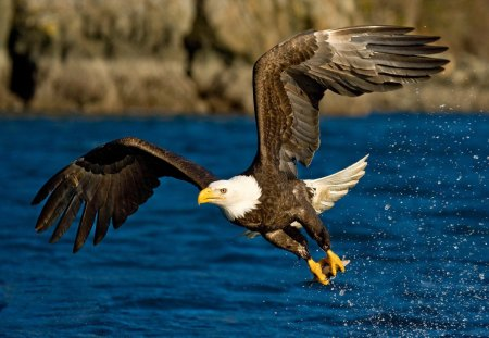 Eagle - eagle, wings, talons, flying