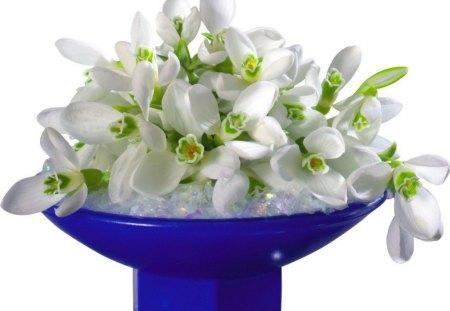 Primroses for Sheryl - flowers, white green leaves, blue, primroses, vase