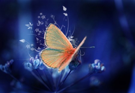 Glistening Butterfly - orange, beautiful, butterflies, glistening, picture, fantasy, cool, butterfly, insect, flowers, other, animals, blue