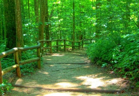 Going to Pave Your Way Through the Forest - forest, trees, leaves, daylight, limbs, green, pave, dirt, path, day, nature, light