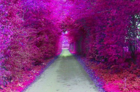 Purple Tunnel - colorful, pink, path, amazing, image, colours, awesome, photoshop, forests, cool, leaf, trail, art, leaves, gray, photography, widescreen, abstract, multicolor, tunnel, plants, violet, foliages, colors, nice, trees, 3d, carpet, magenta, beauty, beautiful, purple, foliage, fantasy, wood, artistic, renderized, grove, view, artwork, picture, photo