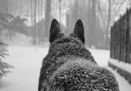 Behind The Wolf
