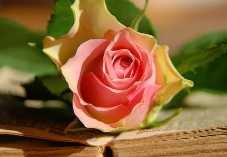 Rose and old book - lovely, love, book, pretty, petals, red, beautiful, gift, pink, sunny, rose, shadow, nice, flower, old, leaves, romantic