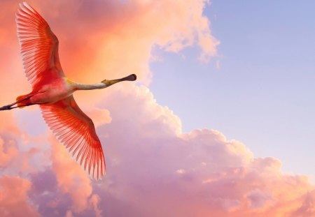 Pretty Bird Flying in The Sky a Pink Sky Pin Pretty Bird