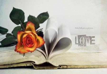 Love - still life, book, love, rose