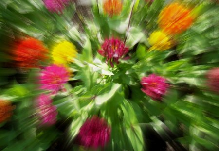 A Light Speed Bouquet - red, blurred, orange, michigan, green, frankenmuth, summer, flowers, garden, golden yellow, pink