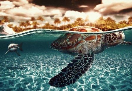 turtle - water, ocean, turtle, wallpaper