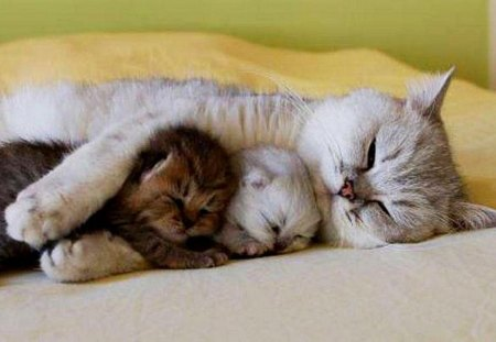 Goodnight - family, cat, goodnight, animals
