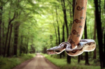 SNAKE ALERT - jungles, forests, reptiles, tropical, snakes