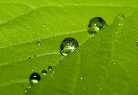 Leaf drops - reflection, drops, leaf, water, green