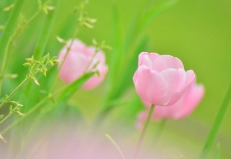 Pink flowers - flowers, nature, green, pink