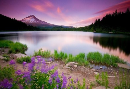 Lavender Lake - flowers, lavender, lake, mountains
