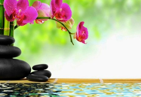 A View For Relaxation Flowers Nature Background Wallpapers On Desktop Nexus Image 1117481