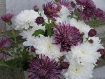 MAUVE CRYSANTHEMUMS