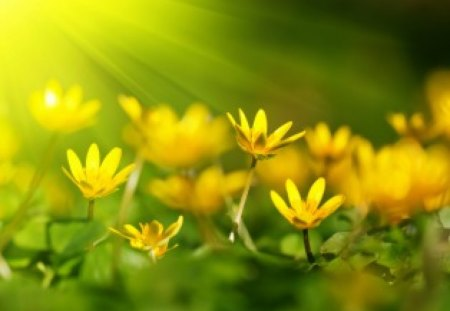 Sunshine nature - Flowers & Nature Background Wallpapers on ...