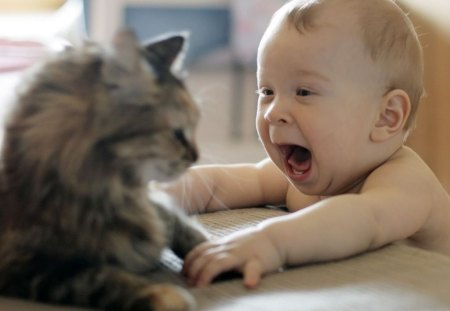 Baby joy - kitty, adorable, cat, baby, cute, pet, funny, kitten, animals