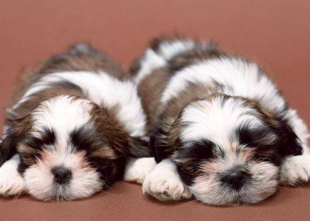 Comments On Cute Puppies Sleeping Dogs Wallpaper Id 1119767
