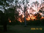 sun setting behind gum trees