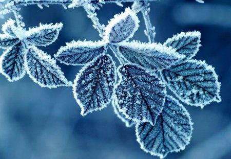 Leaf - beautifull, winter, leaf, amazing