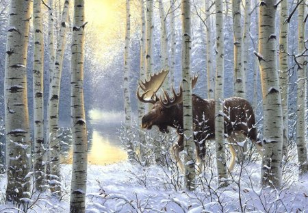 moose in winter - water, moose, trees, snow