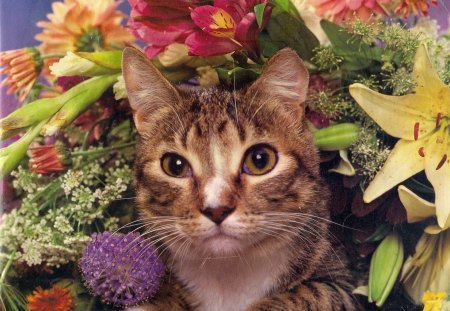 I am watching you move - flowers, paws, gold-eyed, cat