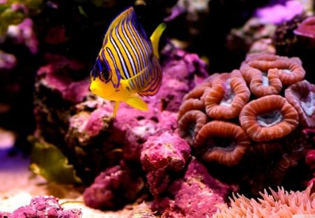 Colorful Reefs - fish, color, sea, coral, reef