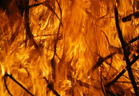 Blazing Forest Fire - inferno, fire, wildfire, forests, trees, blazing