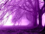 Fog Purple Trees