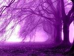 Fog Purple Trees