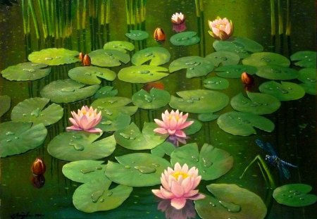 Mr litvinenko blooming pond flowers nature for Koi fish pond lotus