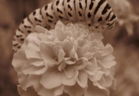 Colourless Worm - flower, point, worm, colourless