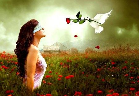 GIFT of LOVE - messenger, rose, girl, blindfold, field, spring, dove