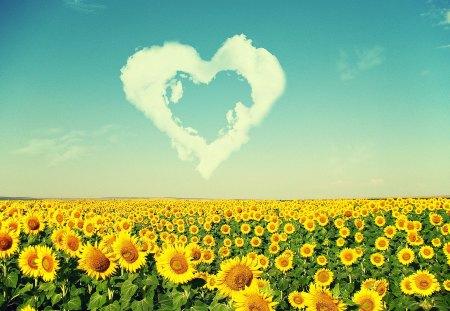 Summer Time - flowers, cloud, blue, sky, summer, heart, sun, flower, yellow