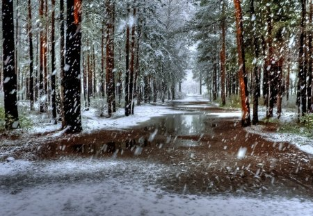 As the Snow Falls - forest, wet, road, snow