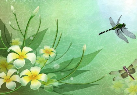 Frangipani and Dragonflies - dragon fly, fleurs, transparent, plumeria, spring, abstract, frangipani, green, subtle, dragonflies, summer, flowers, vintage