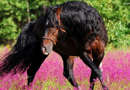 Beautiful Horse - horses, animals, nature, mane, brown horse, flower