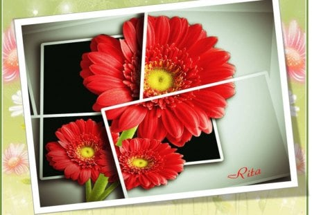 LARGE RED DAISY - OOB! - daisy, large red, multiframed, oob