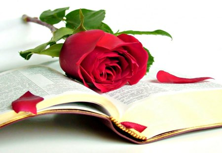 With Love, For Andonia - with love, red roses, red, rose, happy birthday, book, beautiful, birthday, sweet, red rose, love, flowers, beauty, for you, bible, red petals, lovely, andonia, roses, nature, petals