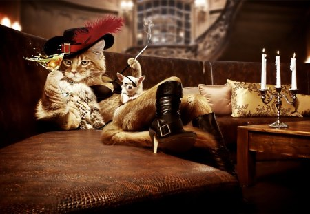 Cat musketer - drink, smoking, cat, fun, dog, humor