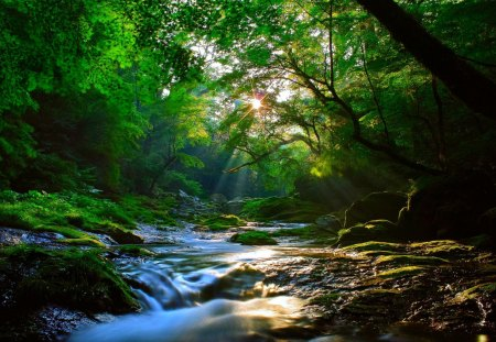 FOREST SUNBURST - forest, stream, sun, maple, coolness, nature, river, light rays