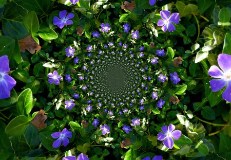 The magic of flowers - violets, fractals, blue, green, flowers