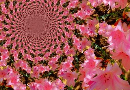 Lilies - flowers, rosette, lilies, fractals, pink