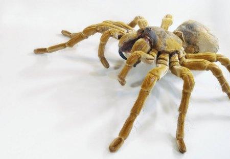 The Goliath Bird eating Spider - spiders, spider, tarantula, goliath spider, predators