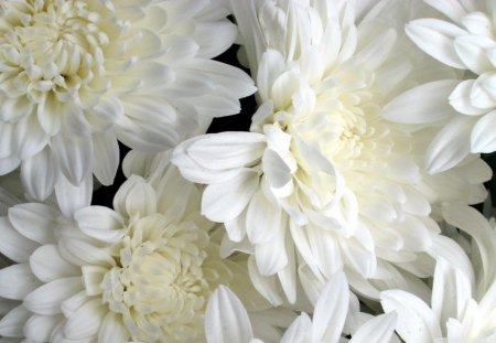 Bunch Of White Flowers Flowers Nature Background Wallpapers On