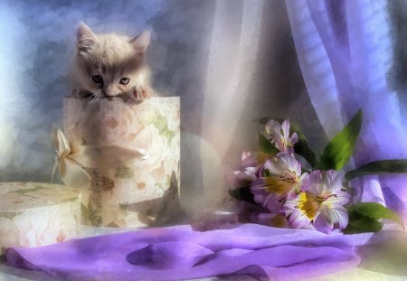 Peek a Boo - elegant, kitty, adorable, still life, cute, sweet