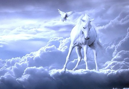 Watching From Above - white horse, pegasus, clouds, fantasy, horses, nature