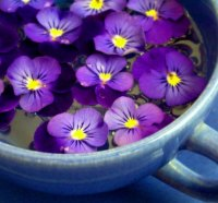 Flower of February - Violet