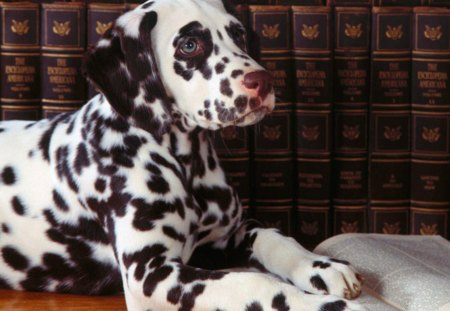 Dog Reading - funny animals, spotted dog, puppies, dogs, pets, book
