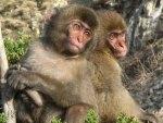 Cute Primates