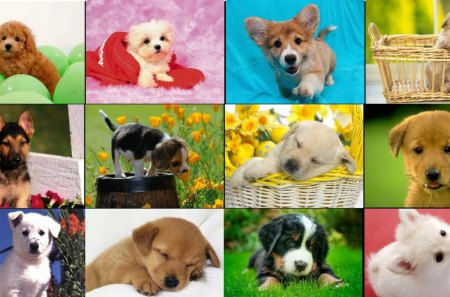Dog Collage - cute dogs, puppies, nature, pets, animals, dogs